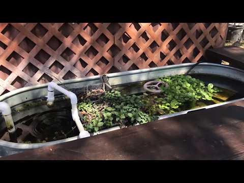 Nine Mile Farm Aquatics Update 3-13-18