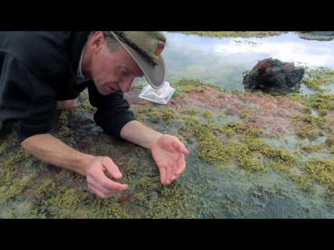 Wildlife Wanderings - Rock pools Ep 5 - Hairy Stone Crab & Abalone
