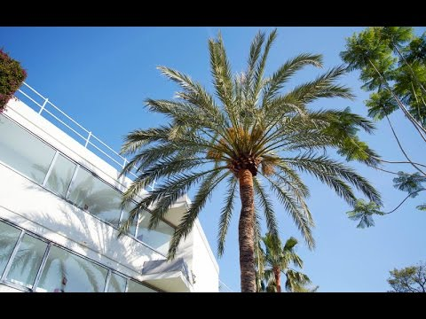 Hotell Sofia på Mallorca