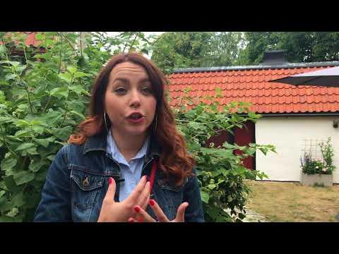 Sofie Jonsson, Ungdomsbarometern