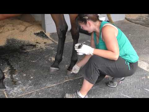 "Tack to Track presented by Jacks - How to use ""Enticer"" liniment"