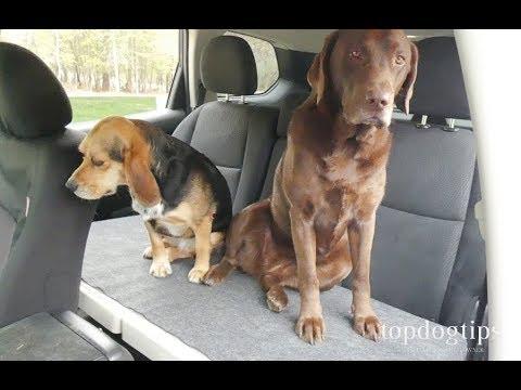Car-Dek PetDek Dog Car Seat Review