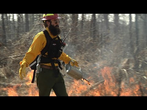 Cover photo for Homegrown | Conducting a Prescribed Burn to Restore Longleaf Pines