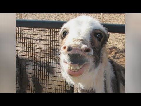 Just LAUGH and FORGET ALL PROBLEMS - THE FUNNIEST ANIMALS