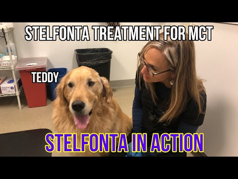 Cancer Treatment Stelfonta in Action for Mast Cell Tumors in Dogs - VLOG 132