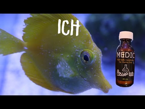 Reef safe Ich treatment medic from Polyplab