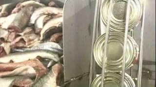 Среда обитания - Что в консервной банке? Вместо тунца можем купить горбушу и почему долго хранится?