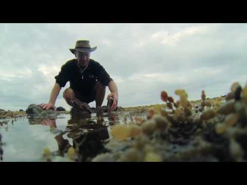 Wildlife Wanderings - Rock pools Ep 7 - Rock Blenny & Mussels