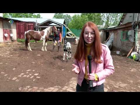 Необычный жеребёнок появился в прошлое воскресенье в сыктывкарском конном центре «Аврора»