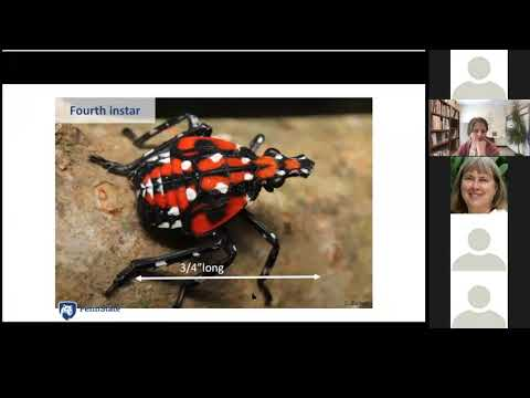 Spotted Lanternfly Basics for Nursery, Greenhouse, and Landscape Industries
