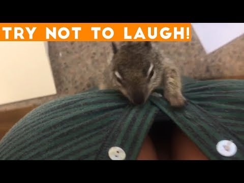 TOP 100 FUNNY ANIMALS of 2018 | Try Not To Laugh Challenge March / April | Funniest Pet Videos - UCYK1TyKyMxyDQU8c6zF8ltg