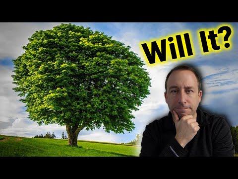 Ham Radio Antenna: Will a Tree-tenna Work?