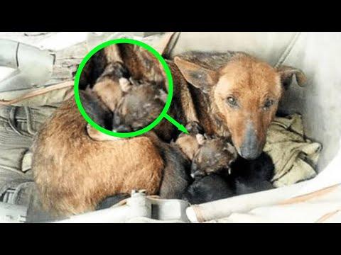 Pronašla je uličnog psa sa 6 kučića - kad je pogledala bolje, ostala je u nevjerici!