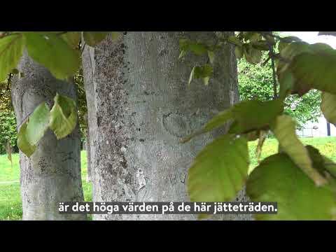 Träd i Lund