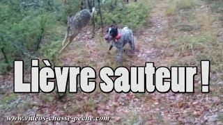 Lièvre sauteur