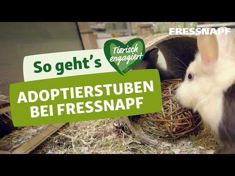 Ein Haustier aus dem Tierheim adoptieren: Mit der Fressnapf Adoptierstube