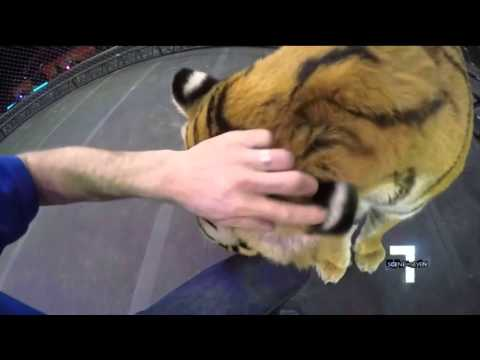 Up Close With Ringling Bros. and Barnum & Bailey Tigers - UCcN0c_dOZmWiE3K8i-_gtgg