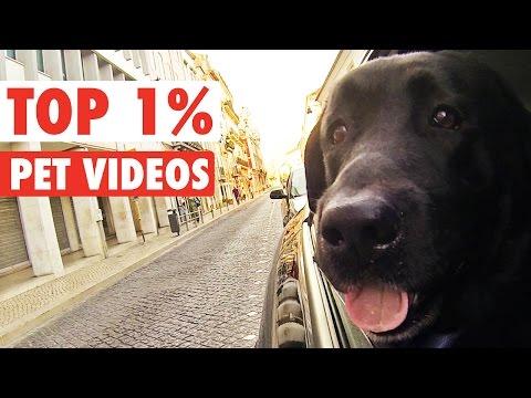 Top 1% || Funny Pet Compilation - UCPIvT-zcQl2H0vabdXJGcpg