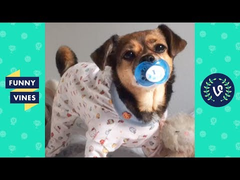 Funny Animals Vines V2 March 2018 Compilation | Cute Pets, Dogs, Birds, Cats Videos Monthly Montage - UCd07rKJ7Q0pg5ths7Pz8k8Q