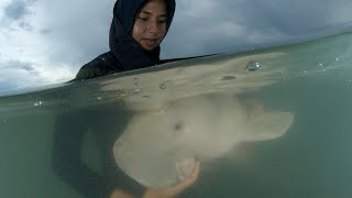 Orphaned baby dugong dies after eating plastic