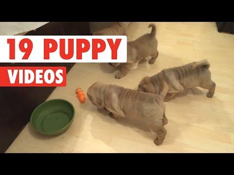 19 Funny Puppy Videos | Funny Pet Video Compilation 2017 - UCPIvT-zcQl2H0vabdXJGcpg