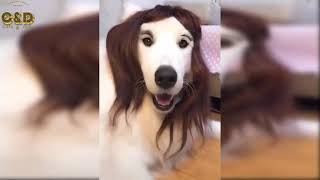 Crazy Animals Video Compilation - Funny & Cute #185
