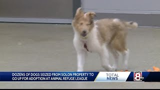 Some of 100 animals seized from Maine home ready for adoption