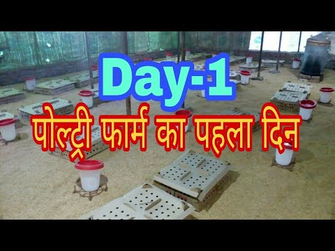 Day-1 ,chicks opening,Poultry farming - VidVui