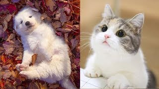 Funny Baby Animals - Beautiful puppies, Cute kittens, Funny pets