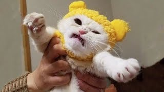 ? Funniest And Cutest ? Dogs And Cats ? Funny Pet Animals' Life ?