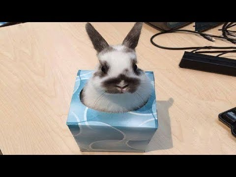 14 Funny Bunny Videos Awesome Bunnies Compilation Impresspageslt