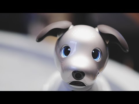 Sony's adorable new Aibo comes to the US - UCCjyq_K1Xwfg8Lndy7lKMpA