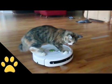 Roomba Cats: Compilation - UChl6CG-V7LgqhfwkvbHH67Q