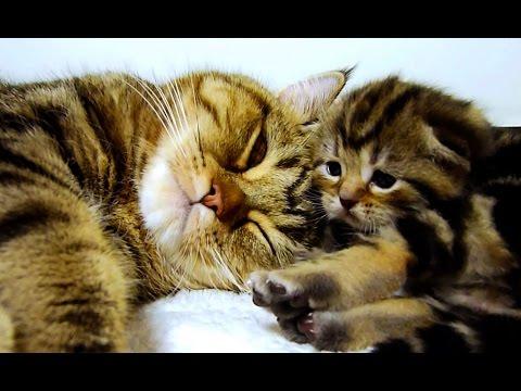 Mom Cat Talking to her Cute Meowing Kittens  20 min BONUS Video - UCERQZLRMniqsMlgBxme32cQ