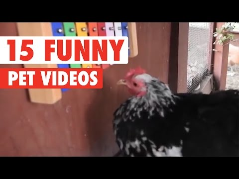 15 Funny Pet Videos Compilation 2016 - UCPIvT-zcQl2H0vabdXJGcpg
