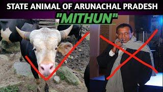 ALL ABOUT MITHUN : THE STATE ANIMAL OF ARUNACHAL PRADESH AND NAGALAND