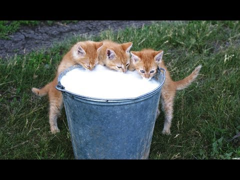 Funny Cats And Kittens Saying YUM YUM YUM While Eating And Meowing || NEW - UCCLFxVP-PFDk7yZj208aAgg