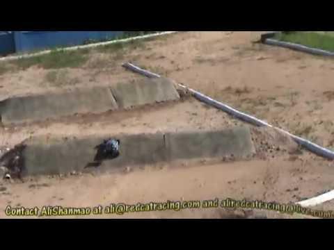 RedCat Racing Shockwave Nitro Buggy On Track - UCsFctXdFnbeoKpLefdEloEQ