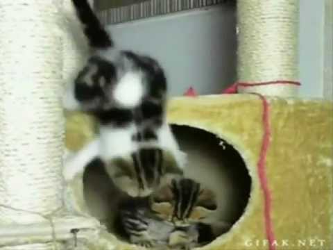 Happy Birthday, Funny Kittens Style! - UCqvU1c9wFJee42godRCSS5A