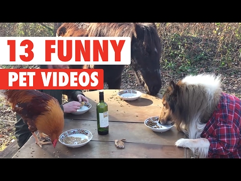 14 Funny Pet Videos Compilation 2017 - UCPIvT-zcQl2H0vabdXJGcpg