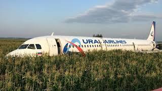 Ural Airlines: A321 se queda sin motores durante despegue y aterriza en un campo de maíz