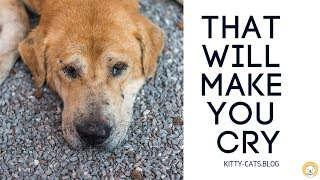Pet videos that will make you cry - Try Not To Cry Challenge 1000% crying