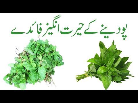 Pudina benefits in urdu   Pudina khane ke fayde   Pudina ka istemal