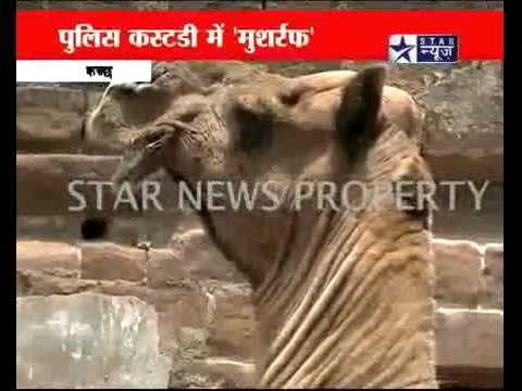 Indian Media gone crazy...India caught a spy camel sent by ISI