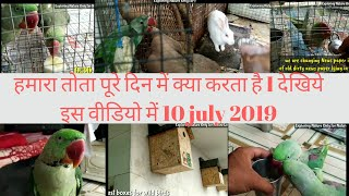 Alexander parrots daily routine care | must watch 10/07/2019 | mitthu