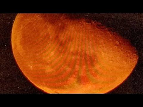 Has John Kerry Leaked Again? Blood Moon On Horizon