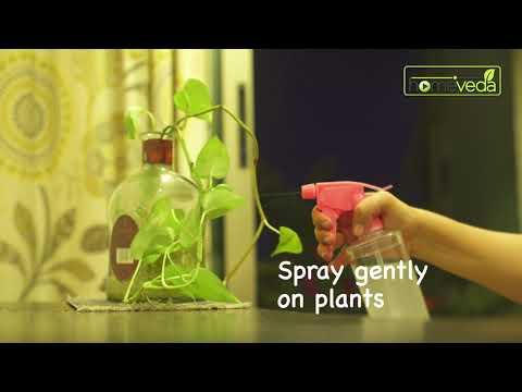 Organic Pesticide For Plants  Easy Remedy - Homeveda