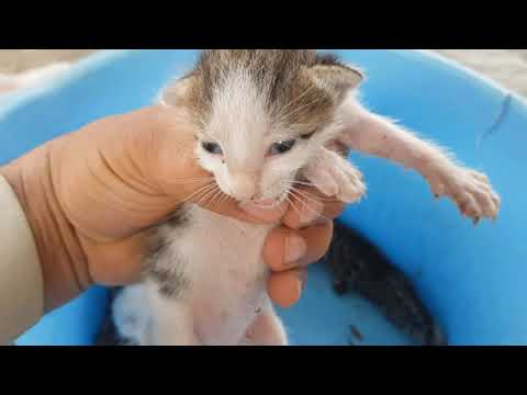 Funny kittens Meowing Loudly  Compilation 2020 - UCbc4ayMtiqp-OJvAx6twbmA