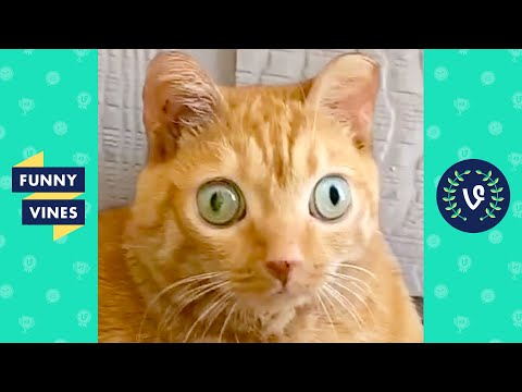 TRY NOT TO LAUGH - Cutest Pets & Funny Animal Clips!
