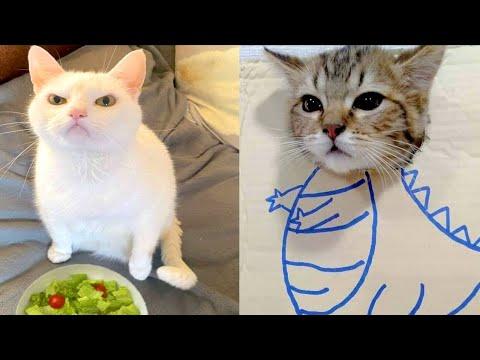 BEST CAT MEMES COMPILATION OF 2020 - 2021 PART 59 (FUNNY CATS) - UCYbggI6qVceWa1_1dfH0hMA